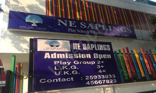 NE Saplings